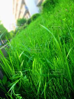 夏の草の写真・画像素材[875998]