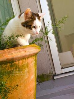 ダイビング白猫の写真・画像素材[876674]