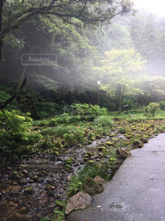 霧の森の写真・画像素材[877608]