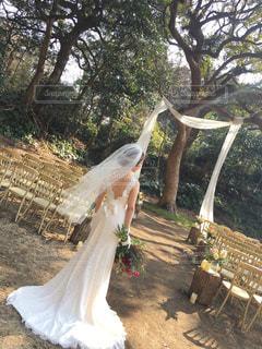 木漏れ日の結婚式の写真・画像素材[1036107]