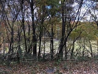 森の中の木の写真・画像素材[877464]