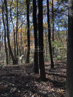 森の中の木の写真・画像素材[877475]