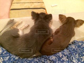 仲良し兄妹くっついて寝るの写真・画像素材[877326]
