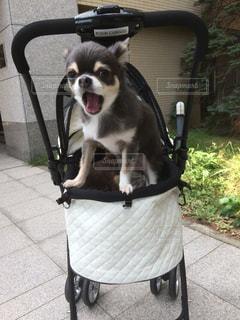 ママぁ〜!の写真・画像素材[877948]