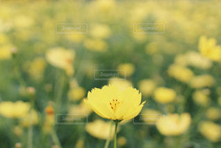 近くの花のアップの写真・画像素材[877048]