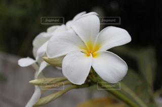 花の写真・画像素材[906738]