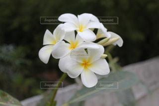 花の写真・画像素材[906741]