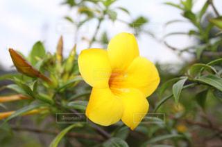 花の写真・画像素材[906751]