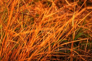 草の写真・画像素材[909074]