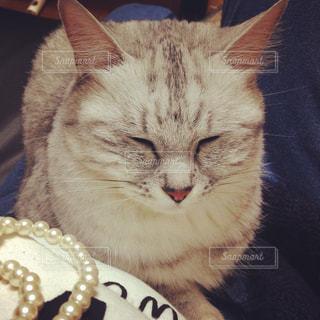 眠い猫🐱の写真・画像素材[880121]