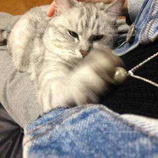 私のネックレスを狙うネコの写真・画像素材[880145]