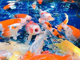 水面下を泳ぐ魚たちの写真・画像素材[914207]