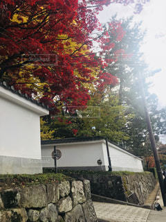 京都の紅葉 - No.879462