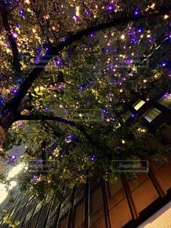 クリスマス ツリーの写真・画像素材[878366]