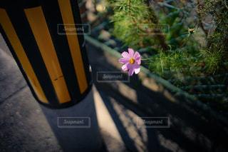 紫の花と花瓶の写真・画像素材[878373]