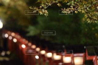 貴船神社の写真・画像素材[884824]