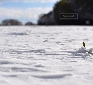 琵琶湖の冬の写真・画像素材[900603]