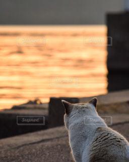 ベンチに座って猫の写真・画像素材[900712]