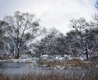 雪景色の写真・画像素材[900761]