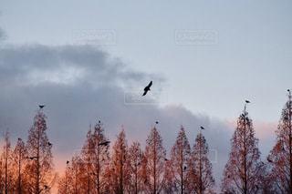 雪の木の写真・画像素材[924075]