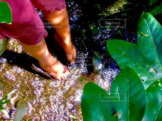 水遊びの写真・画像素材[950276]