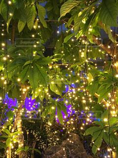 夜ライトアップされたクリスマス ツリーの写真・画像素材[953697]