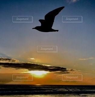 水の体の上を飛んでいる鳥の写真・画像素材[3376786]