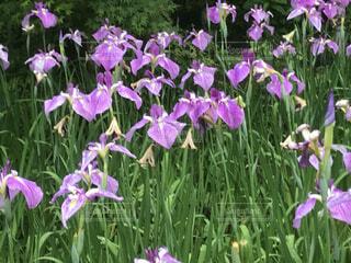 花の園No5の写真・画像素材[4858298]