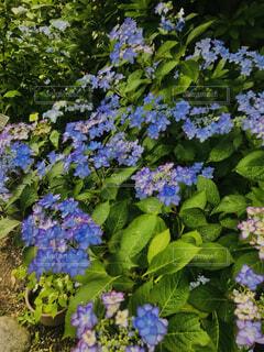 花の園No1の写真・画像素材[4858304]
