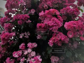花園No9の写真・画像素材[4873975]