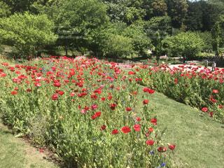 花園の写真・画像素材[4879860]