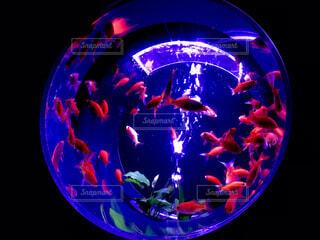 カプセル金魚3の写真・画像素材[4883645]