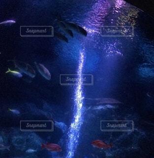 水中1の写真・画像素材[4883651]