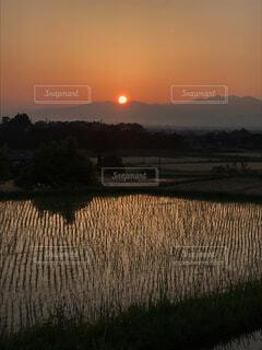 夕日と田んぼの写真・画像素材[4915022]
