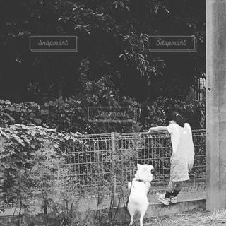 子供と犬の写真・画像素材[879043]