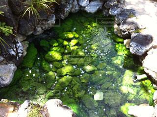 エメラルドグリーンの池の写真・画像素材[879118]