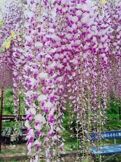 緑の葉とピンクの花の写真・画像素材[879354]