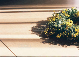 ミモザのリースの写真・画像素材[883091]