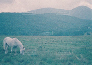 馬の写真・画像素材[895923]