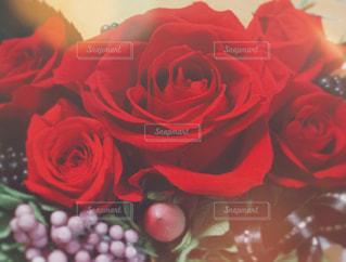 赤いバラの写真・画像素材[882987]