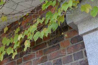 レンガの壁の写真・画像素材[880563]