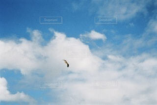 夏の空と鳥の写真・画像素材[4770757]