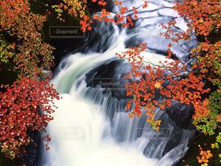 竜頭の滝の写真・画像素材[880892]