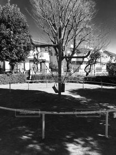 冬の公園の写真・画像素材[905981]