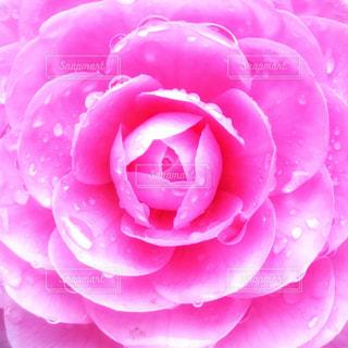花アップの写真・画像素材[1283300]