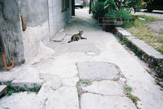 歩道の上に横たわる猫の写真・画像素材[881198]