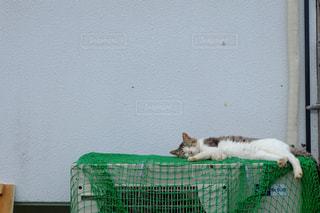 緑のベンチに横になっている猫の写真・画像素材[881309]