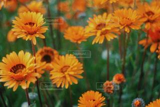 黄色い花の束の写真・画像素材[2918806]