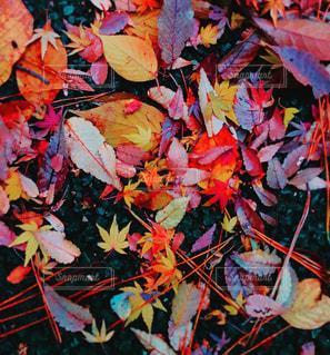 秋の絨毯 - No.881038