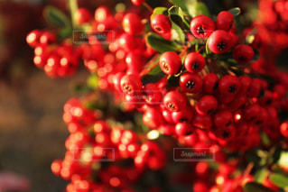植物 冬の息吹の写真・画像素材[881147]